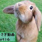 【面白 うさぎ】おもしろうさぎ動画まとめ!#16【かわいい】