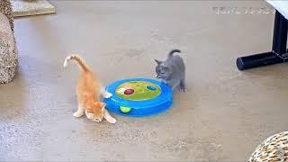 【とっても可愛い💛あかちゃんねこ特集】可愛すぎる動物たち!おもしろ!ハプニング!犬 猫 動物 爆笑♪01