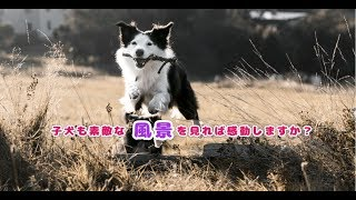 子犬も素敵な風景を見れば感動しますか?