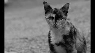 【感動】猫のアン 【泣ける話】