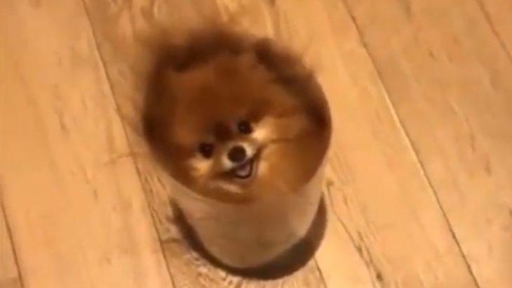 「絶対笑う」最高におもしろ犬,猫,動物のハプニング, 失敗画像集 #01