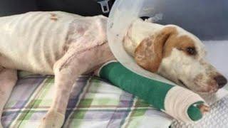【感動】虐待を受け捨てられた犬に更なる悲劇が続く・・・。犬はその後、どうなったのか。【応援したい話】