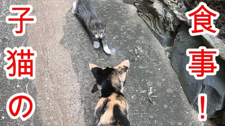 感動する話 お魚くわえた野良猫は子猫のためにお魚を運んでいました。